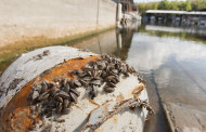 TPWD reminds boaters of zebra mussels