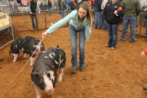 Princeton FFA member Ashley Adams shows off her pig at the livestock show.