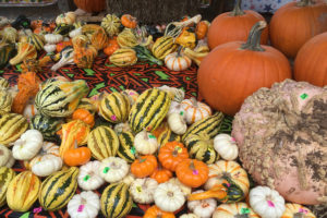 Owner of Sally's Pumpkin Patch, Sally Morales is ready for fall with their first patch of pumpkins. The stand is located on Hwy. 380 in Princeton.