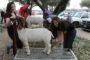 PHS FFA competes at Collin County Junior Livestock Show