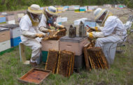 The sweet nectar of money: Blue Ridge honey farm stars on NBC show