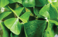 Why does the world celebrate St. Patrick's Day?