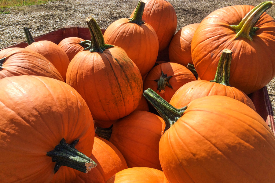 Annual Fall Festival set for Oct. 27