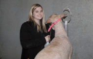 FFA members make sale at show