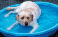 Keep pets cool in the summer heat