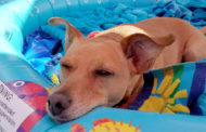 Help pets beat the heat