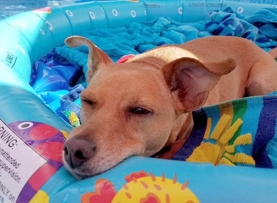 Help pets beat the heat