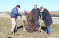 City beautification, development process ongoing
