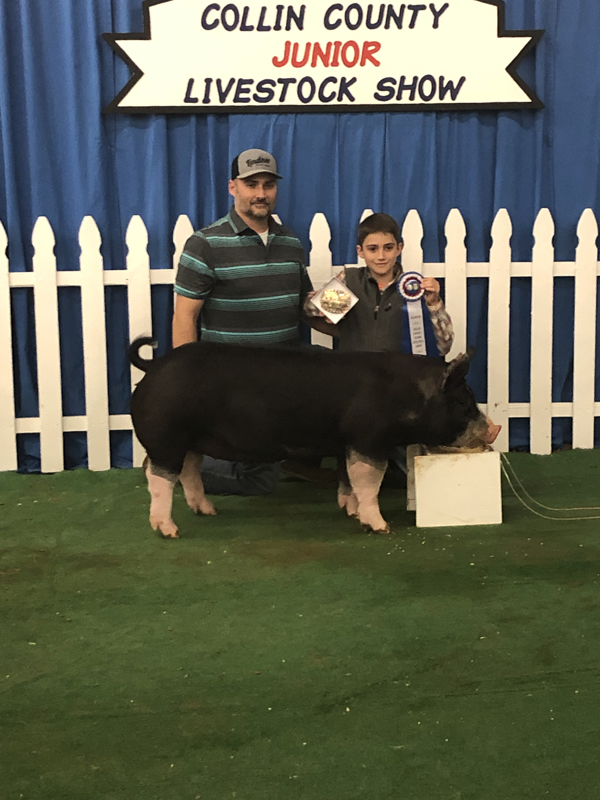 County livestock show hits mid stride