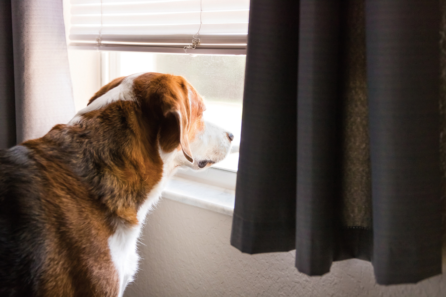 Ways to help transition pets to post-quarantine routines