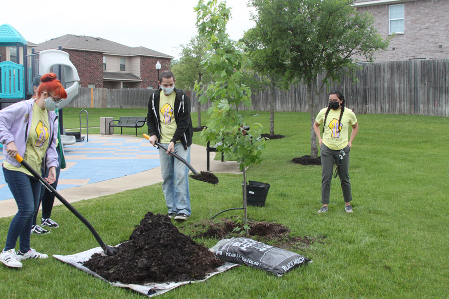 Group plants tree for community